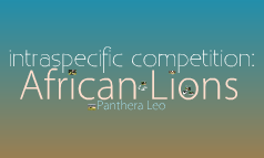 Lion Intraspecific Competition