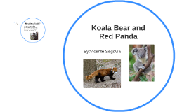 Koala Bear and Red Panda