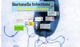 Bartonella Infections
