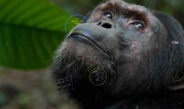 HSP3U - Anthropology - Humans and Other Primates