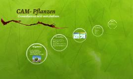 CAM- Pflanzen