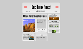 Deciduous Forest Project