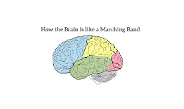 How the Brain is like a Marching Band