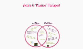 Active & Passive Transport