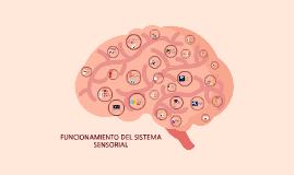 Copy of Funcionamiento del Sistema Sensorial