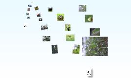 Copy of 植物