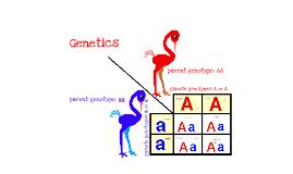 Bio - Genetics
