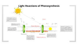 Photosynthesis! Light Reactions and the Calvin Cycle