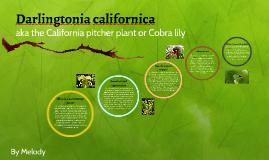 Cobra Lily Bio HW