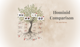 Hominid Comparison
