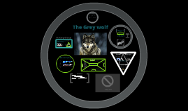 Copy of The Grey Wolf