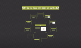 Why do we have tiny hairs on our body?