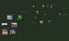 Rainforest Journey 2010