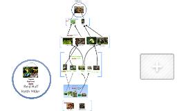 Copy of Tropical Rainforest Biome