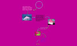 Los delfines rozados