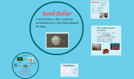 Copy of Sand Dollar