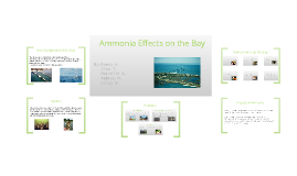 Ammonia Effects on the Bay