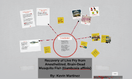 Recovery of live fry from anesthetized, brain-dead mosquito
