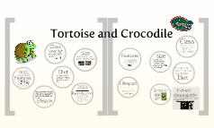Tortoise and Crocodile