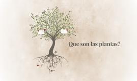 Que son las plantas?