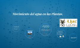 Movimiento del agua en las Plantas.
