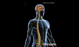 Sistema Nervoso Periférico - Flávia Leite