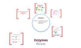 Copy of Enzymes summary