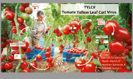TYLCV:Tomate Yellow Leaf Curl Virus.