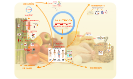 Copy of La Nutrición Animal-I IEA-1Bac