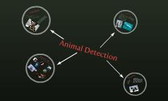 Animal Detection