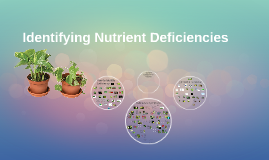 Nutrient Deficiency ID