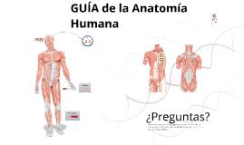 Guía de la Anatomía Humana: Musculatura