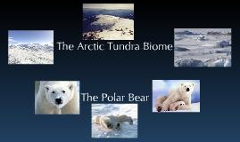 Arctic Tundra Biome + Polar Bears