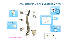 Copy of Columna Vertebral