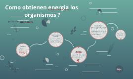 como obtienen energia los organismos