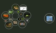 Amphibian Decline