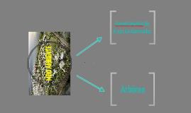 Copy of Apresentação Meio Ambiente - Campinas