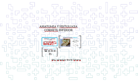 ANATOMIA E HISTOLOGIA