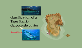 classification of a Tiger Shark-Galeocerdo cuvier
