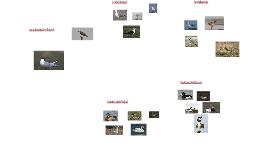 lintuja kokeeseen