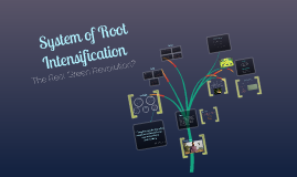 System of Root Intensification