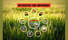 Arthropods and amphibians