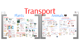 AP Bio- Transport & Gas Exchange