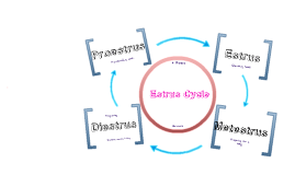 Copy of Estrus Cycle
