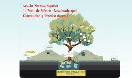 Copy of Lineamientos de Observación y práctica docente secundaria