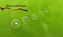 Natrual Selection in Teddy Grams