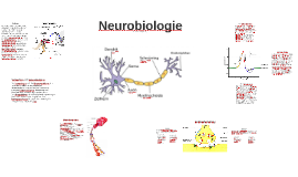 Copy of Neurobiologie