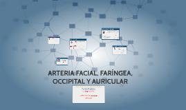 ARTERIA FACIAL, FARÍNGEA OCCIPITAL Y AURICULAR