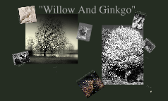 willow and the ginko