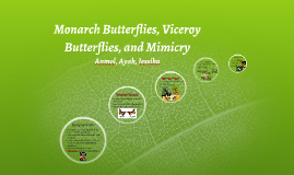 Monarch Vs. Viceroy Butterflies